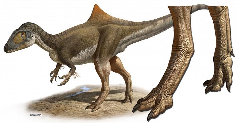 ¿Tenían los dinosaurios carnívoros los pies de gallina?