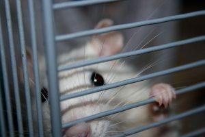 La investigación entre conductas excesivas e impulsividad se ha llevado a cabo en animales | marce