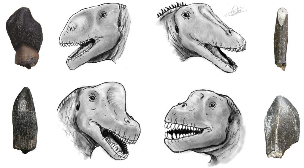 Los cuatro grandes grupos de saurópodos identificados en el Jurásico Superior de la península ibérica relacionados con su tipo de dentición. De izda a dcha, arriba: turiasaurios y diplodocoideos; abajo: braquiosaurios y camarasauriformes. Reconstrucción de Carlos de Miguel.